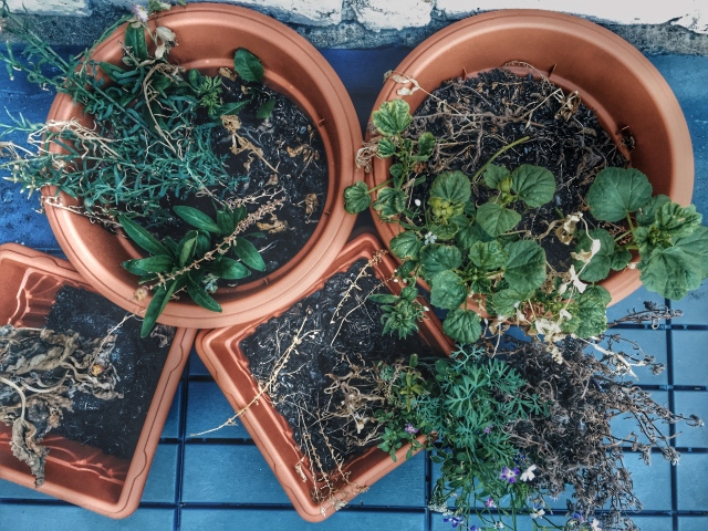 Potted Plants that didn't grow pretty