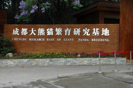 Chengdu_panda_breeding