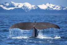 Whale_autoresized